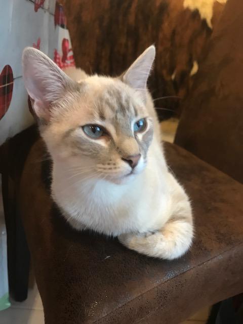 chat tu penses quoi ?